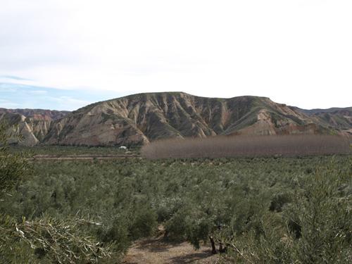 Cerro Forruchu
